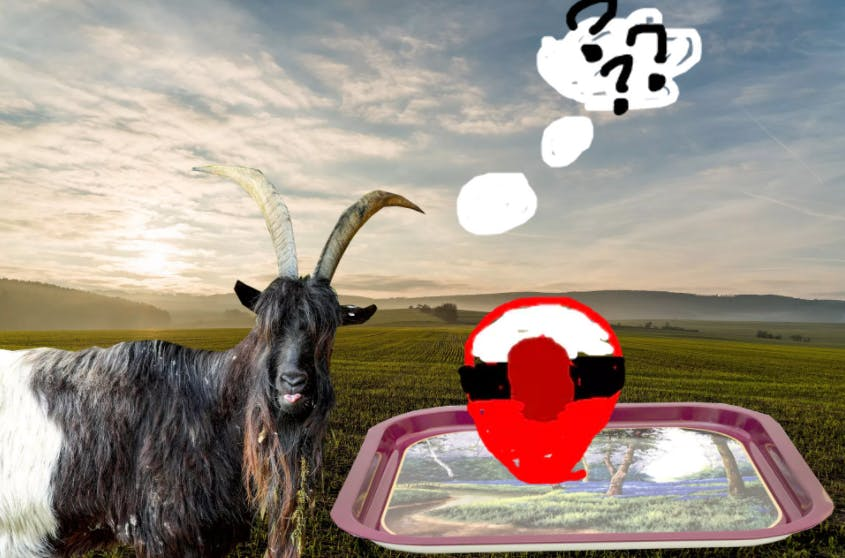A goat confused about the Poke Ball on his dinner tray