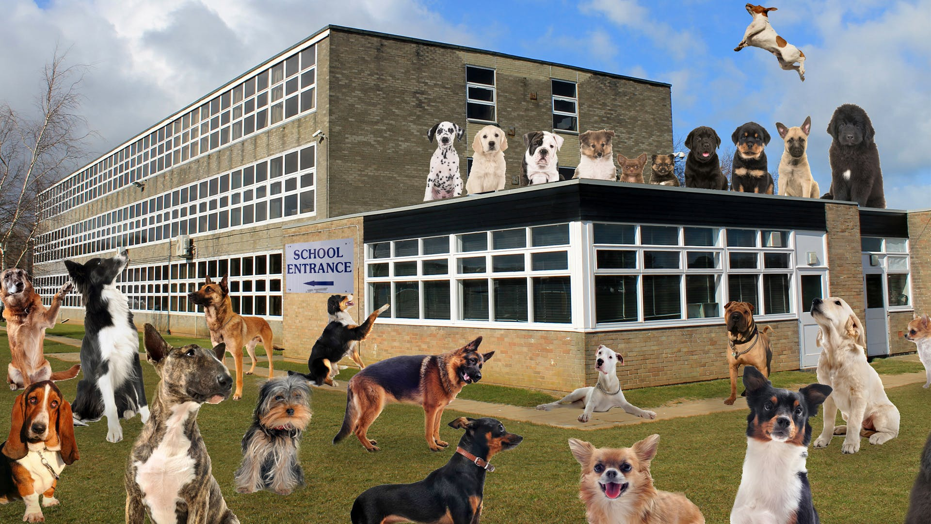 Loads of dogs at a school