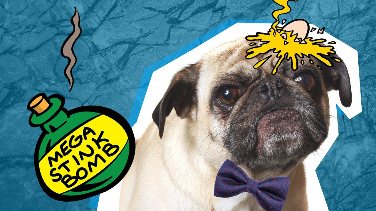 everywhere this pug goes - bad things happen