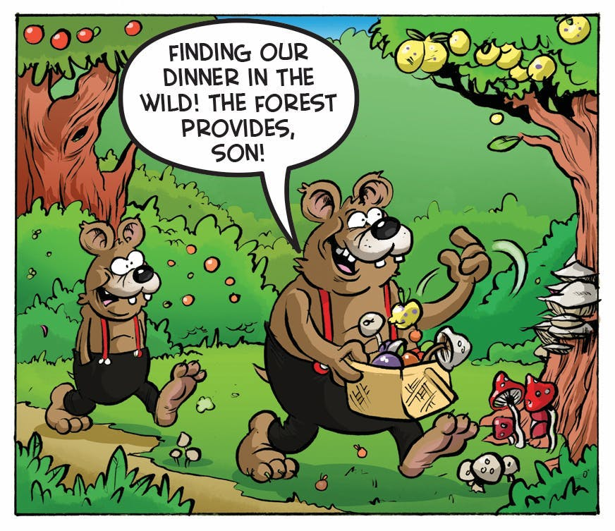 Three Bears comic strip from the Beano.'Finding our dinner in the wild! The forest provides, son!'