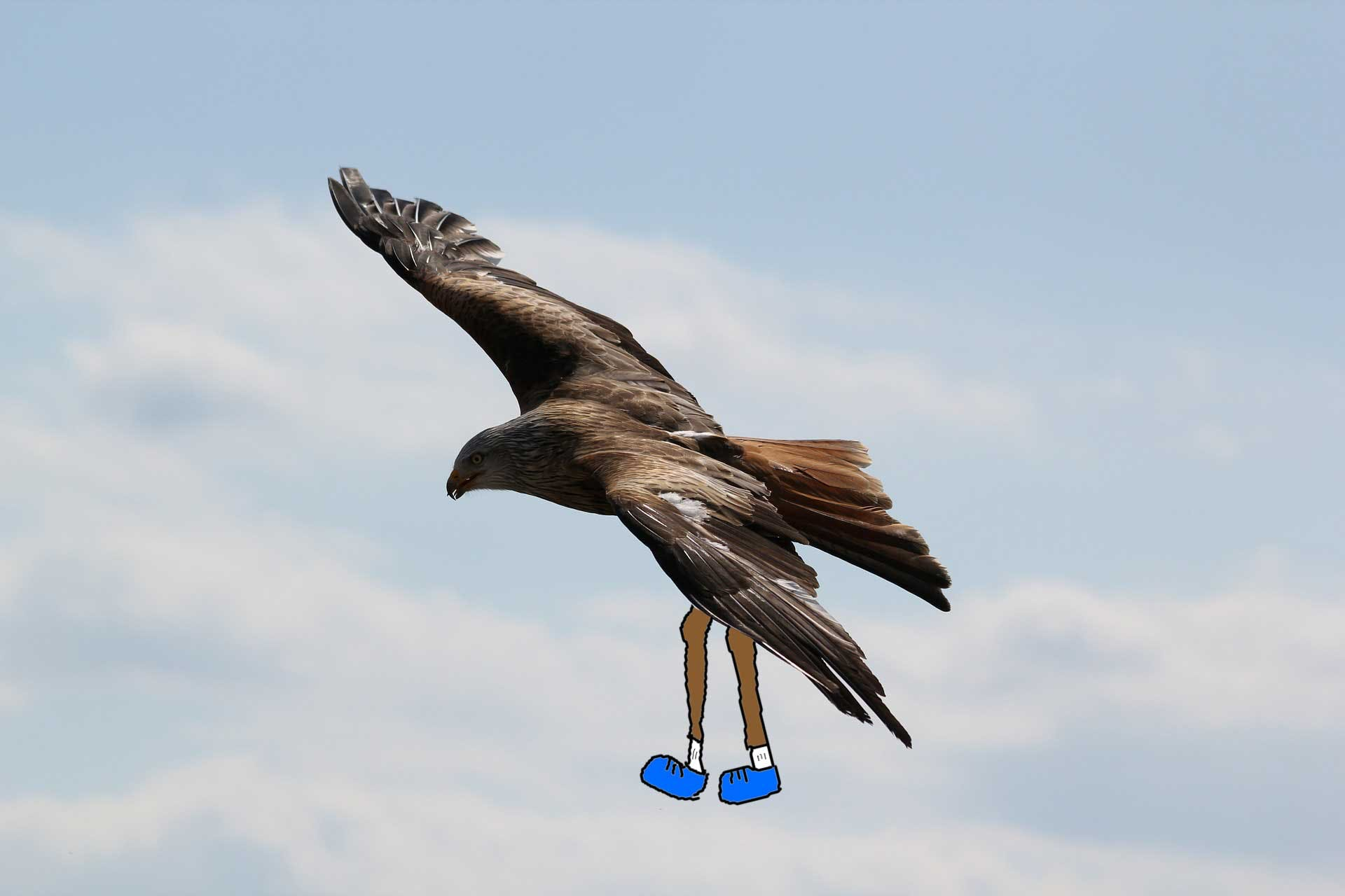 Eagle with human legs
