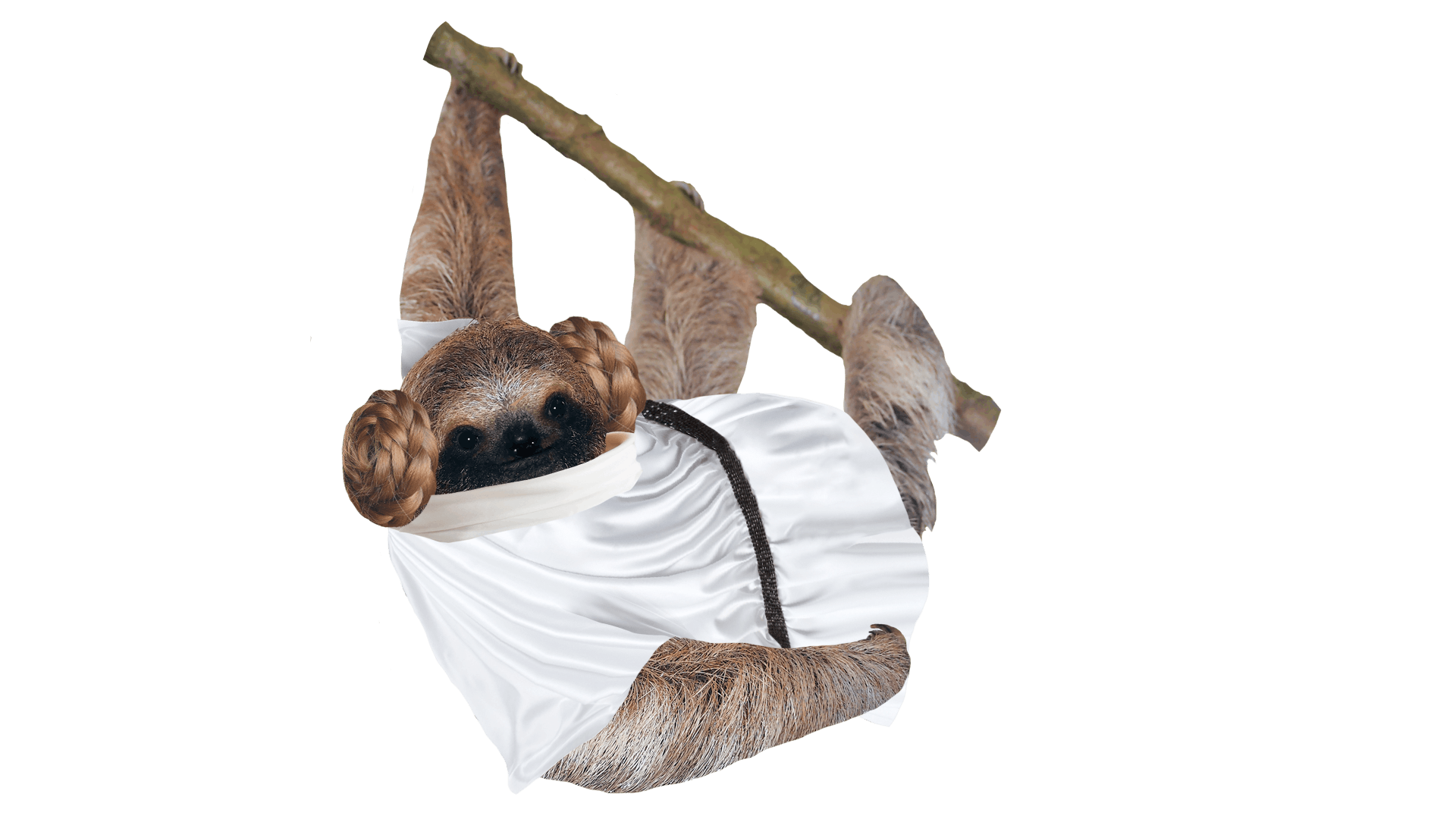 Princess Leia Sloth