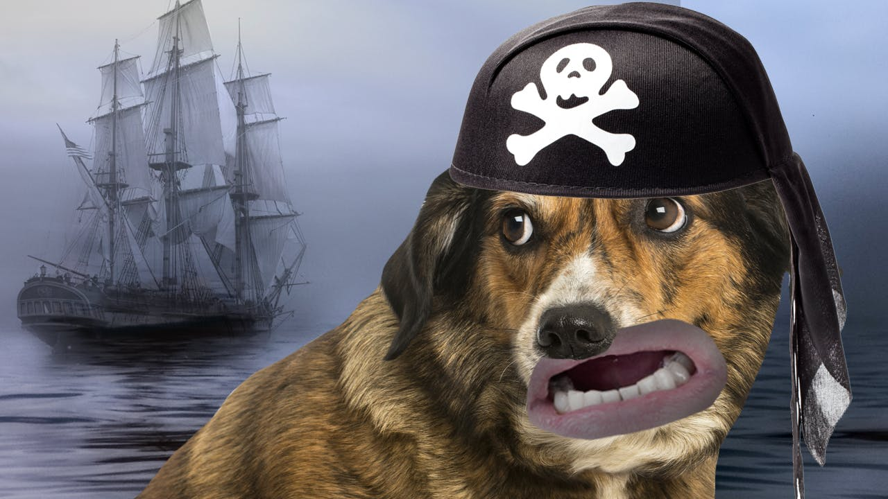 scared sea dog