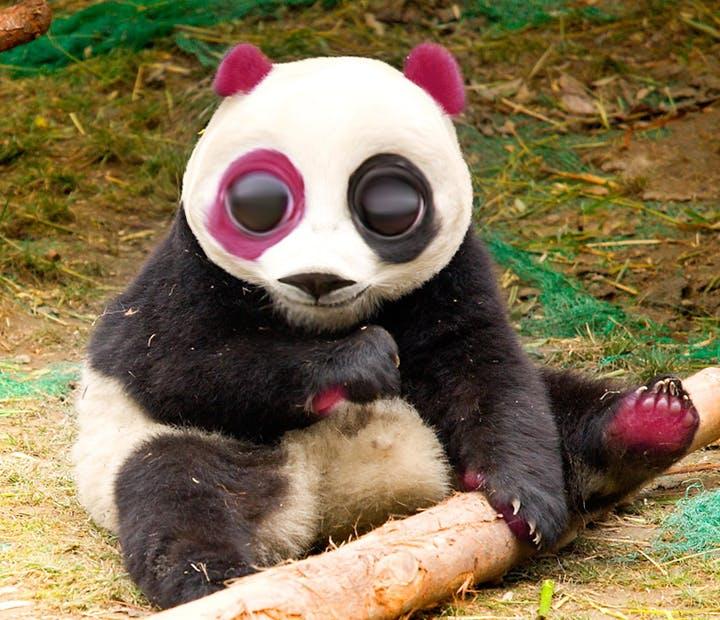 Amazoncom  Pandaloon Panda Puppy Dog Pet Costume Size 1
