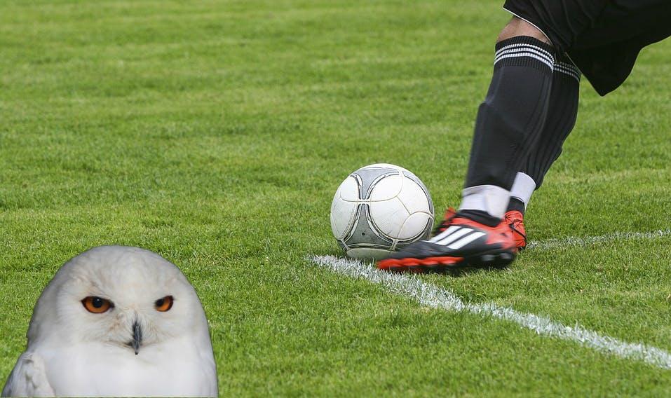 An owl watching footba