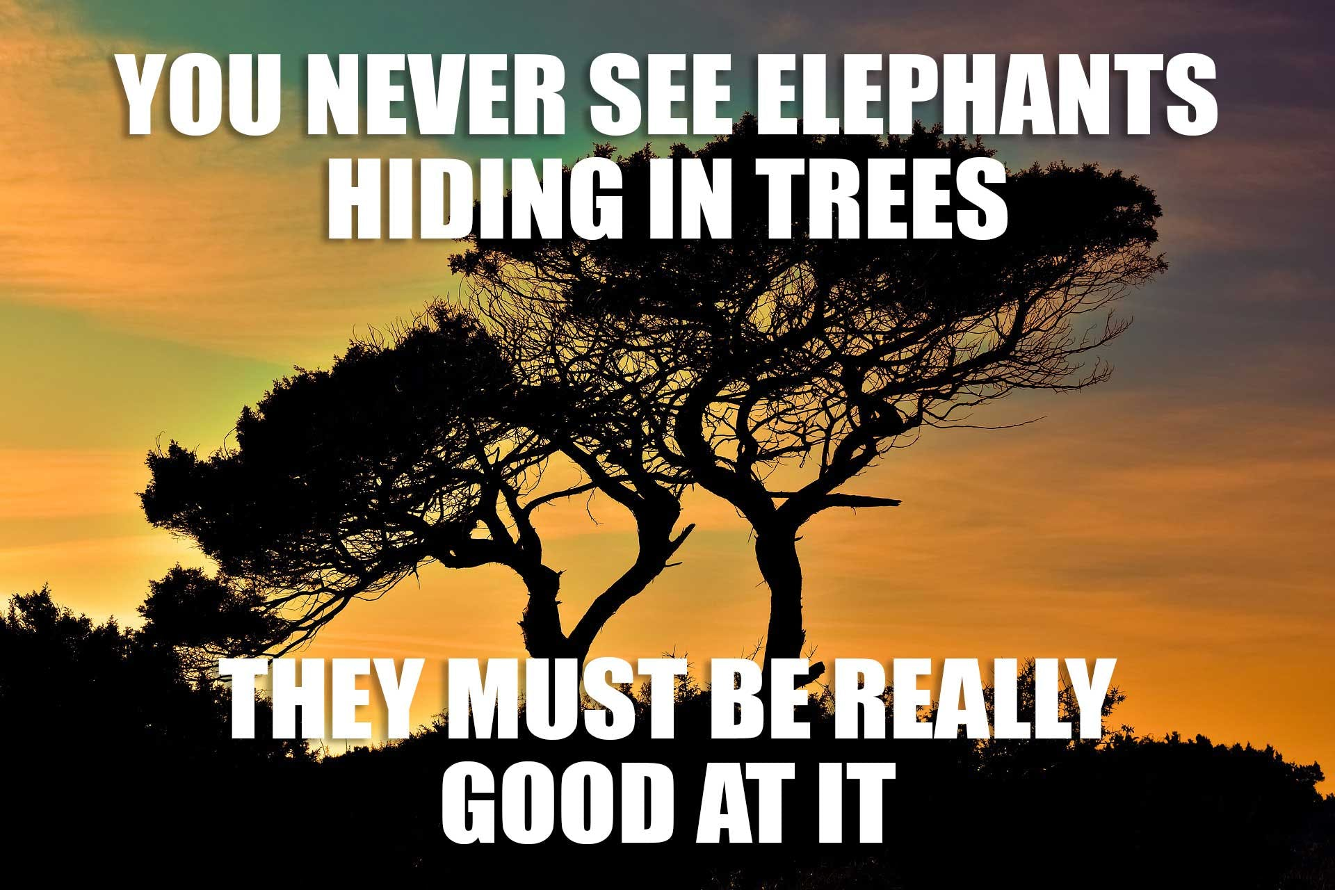 You never see elephants hiding in trees...