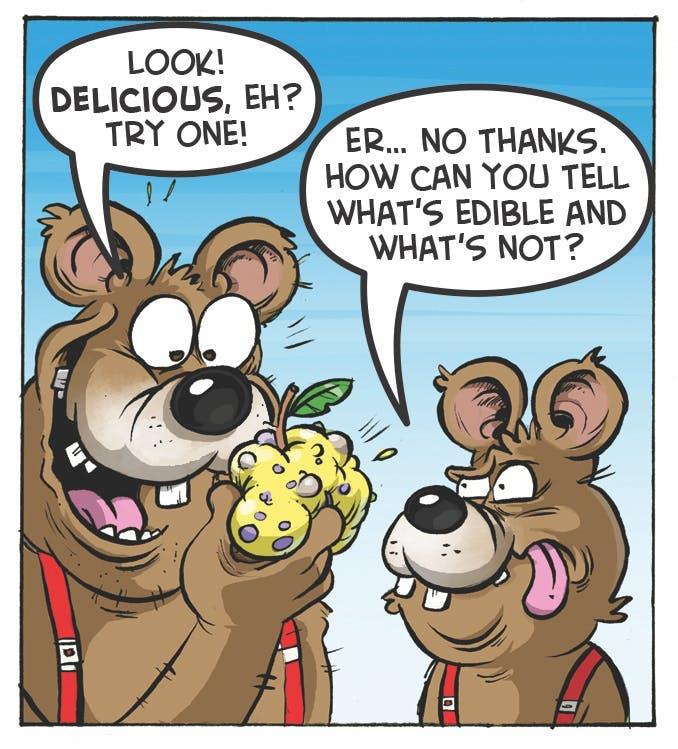 Three Bears comic strip from the Beano. 'Look! Delicious, eh? Try one!' 'Er... no thanks. How can you tell what's edible and what's not?'