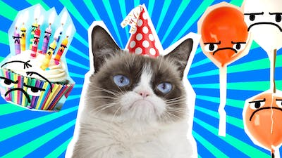 Grumpy Cat S Birthday Weird Amp Funny Animals On Beano Com