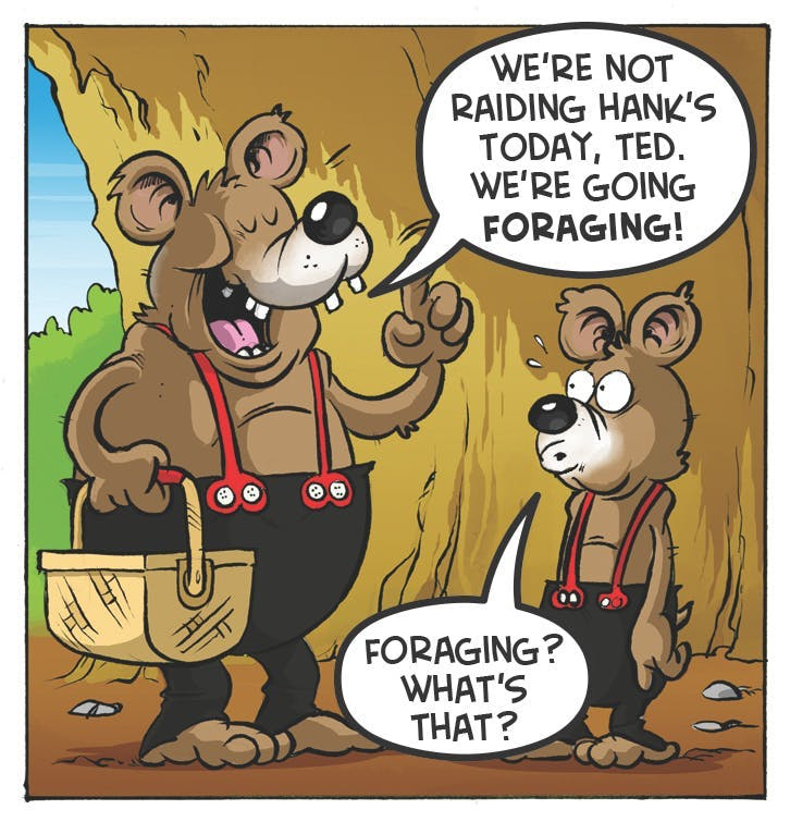 Three Bears comic strip from the Beano. 'We're not raising Hank's today, Ted. We're going foraging!' Ted: 'Foraging? What's that?'