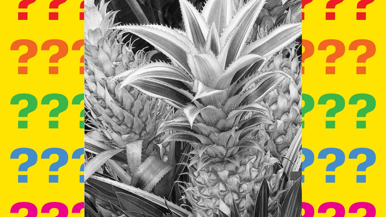 Pineapples in black and white