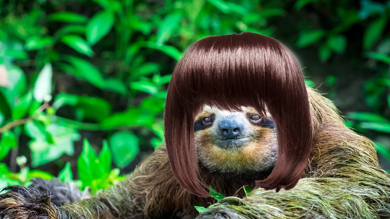 Sloth in a wig