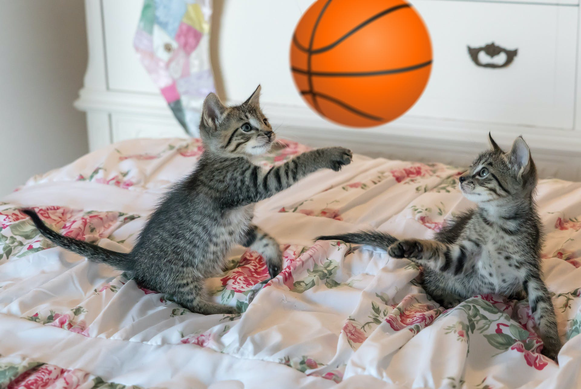 Here's some cats playing basketball
