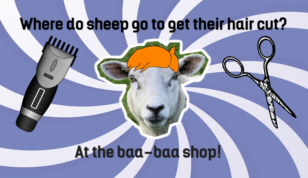 Where Do Sheep Go To Get Their Hair Cut?  Beano. Best Credit Card For Usa Slip And Fall On Ice. How Much Does It Cost To Get Lasik Eye Surgery. Symptoms Of Tree Nut Allergy. Weekend Payday Loans Online Direct Tv Access. Mortgage Companies Sacramento. Payday Loans Companies Online. Auto Transmission Repair Shops. Alabama State University Edu