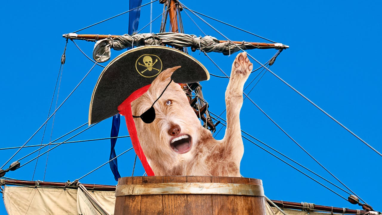pirate dog waving ahoy