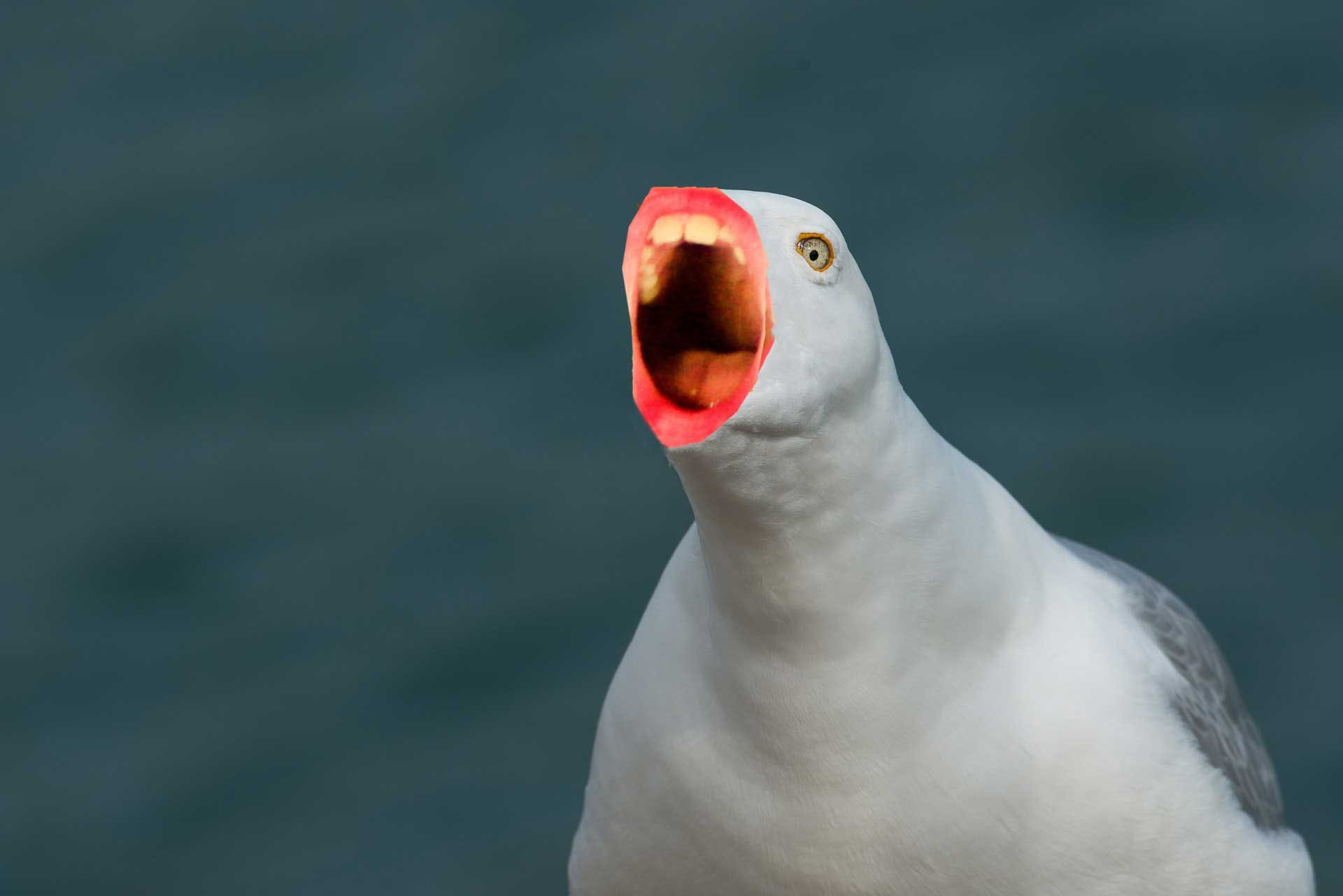 Seagull with incredibly terrifying human mouth