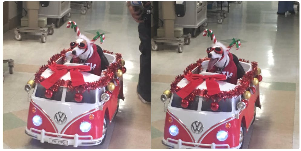 Sancho the pup spreads Christmas cheer!