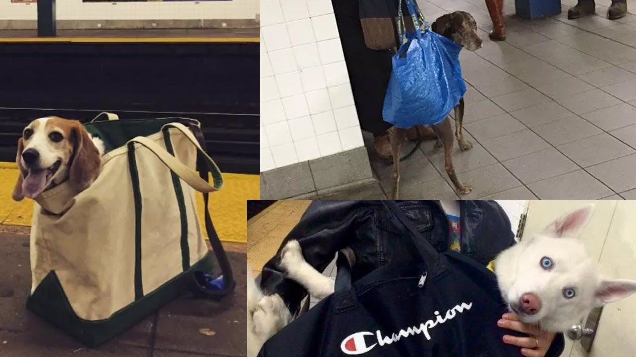 Dogs in bags