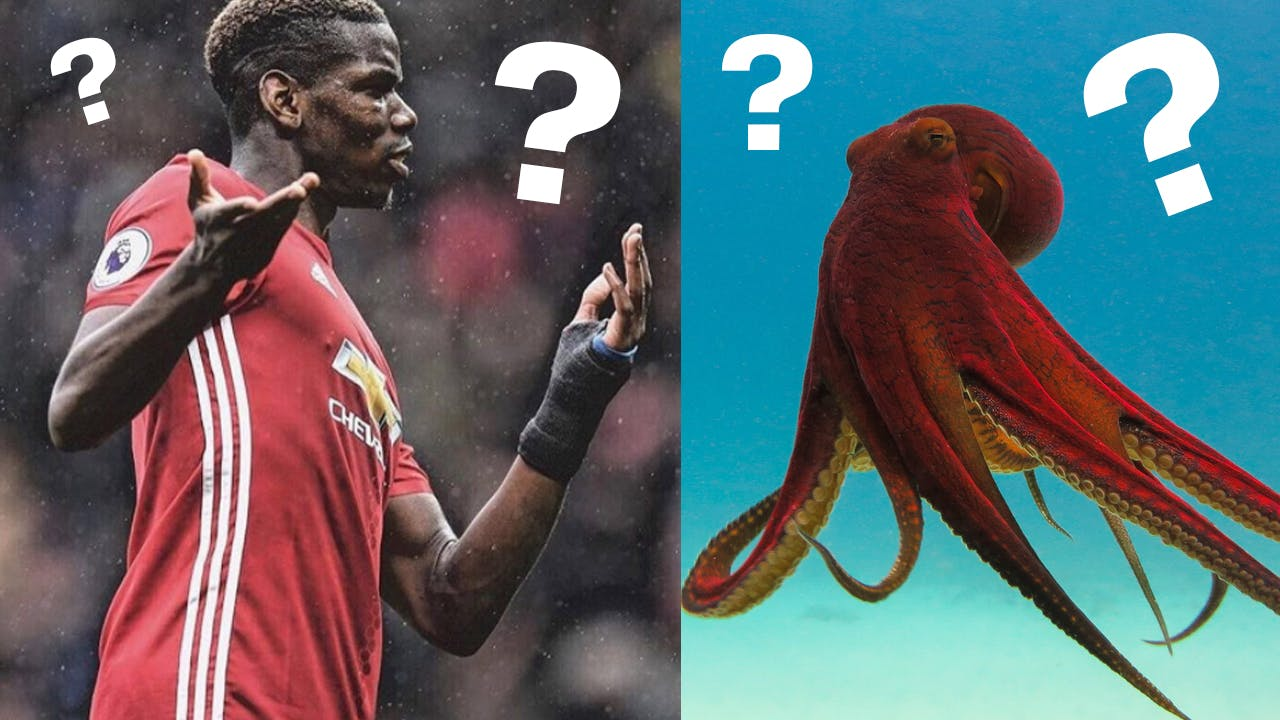 Paul Pogba is an octopus?