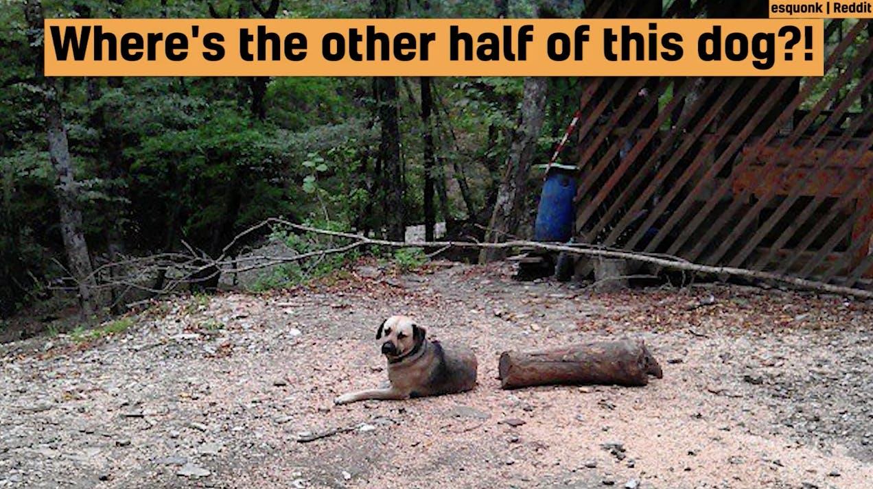 A dog photo illusion