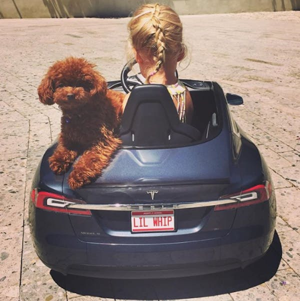 Katy Perry's dog Butters is a passenger in a child's car with the registration plate Lil Whip