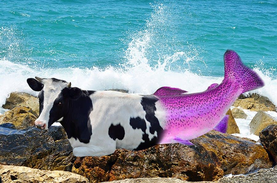 Cow mermaid