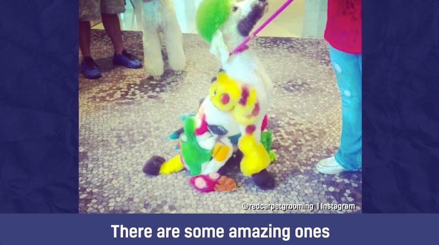 A dog with a Pikachu style hair do