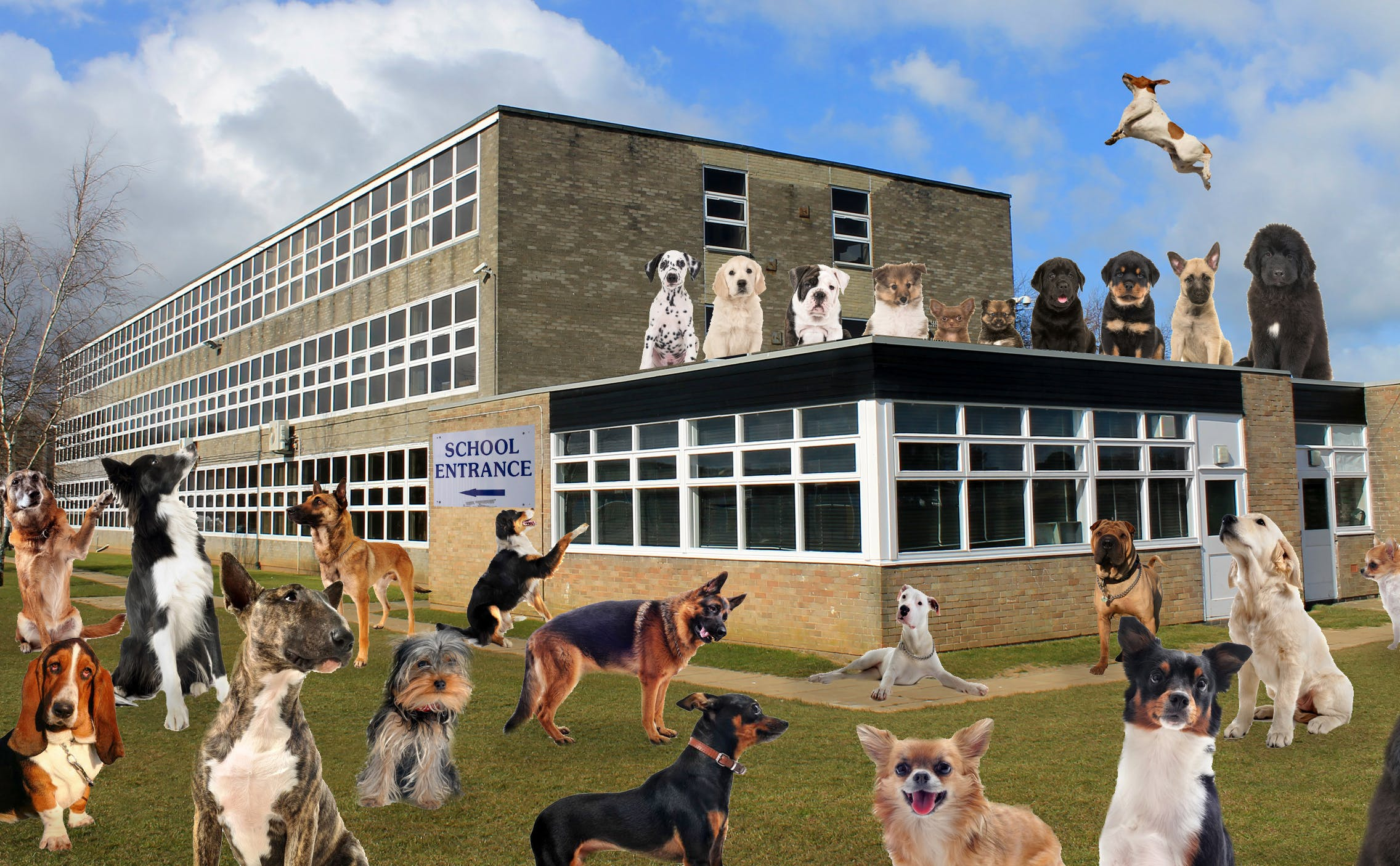 Dogs surrounding a school