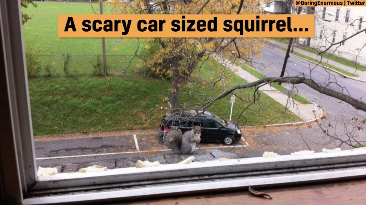 A gigantic squirrel or a little car?