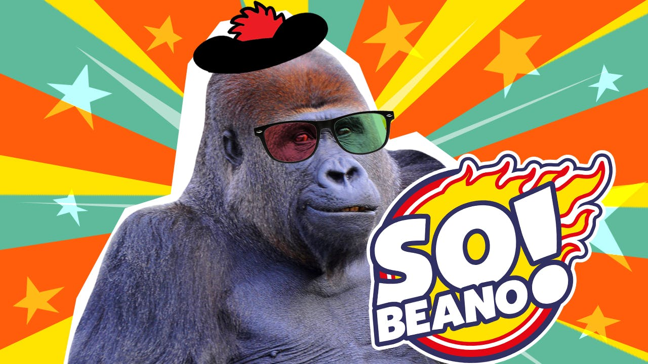 a lovely gorilla who is a champion