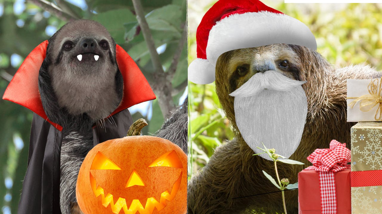 Halloween sloth VS santa sloth