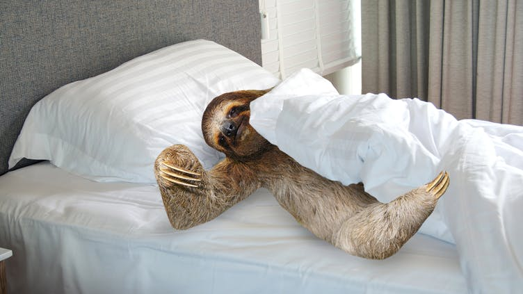What Sloth Are You Personality Quiz Quizzes Animals