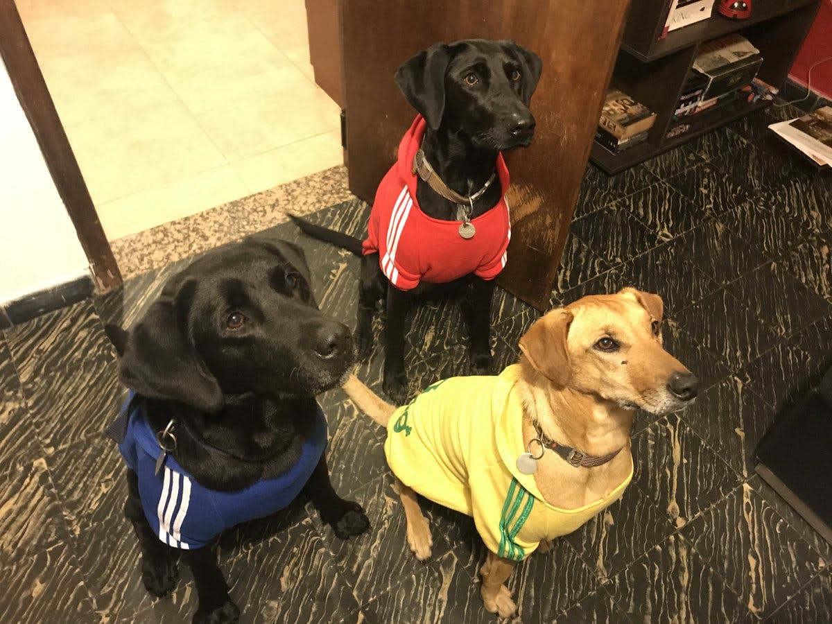 These three hounds have a howl of a fashion sense!